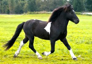 Pferde-Tierarzt_Roessel_pferde1
